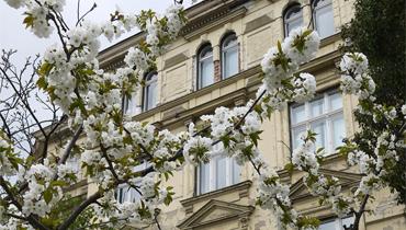 SALE___Penthouse_Atbau_Tiergarten_370x210